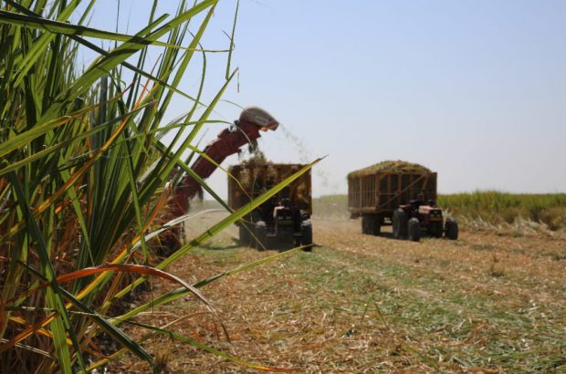 رکورد زنی برداشت نیشکر از مزارع سلمانفارسی