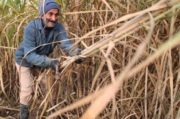 رکورد تولید شکر و نیشکر درطرحهای هفتگانه نیشکری خوزستان شکسته شد