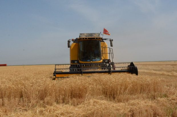 خرید بیش از ۳۸ هزار تن گندم از کشاورزان شوش