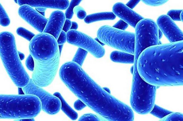 موردی از بیماری وبا در خوزستان گزارش نشده است