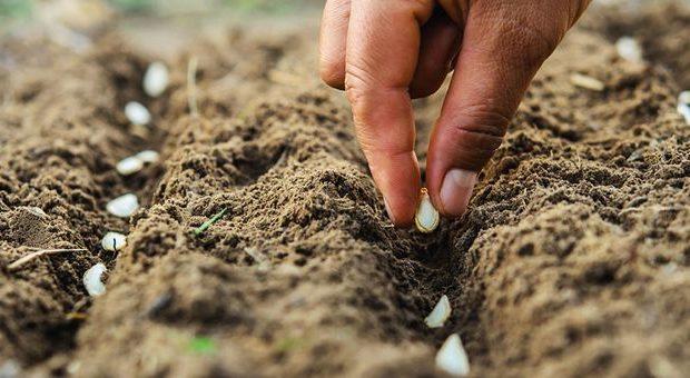 کودهایی که ضعف مواد معدنی خاک خوزستان را جبران می کنند!