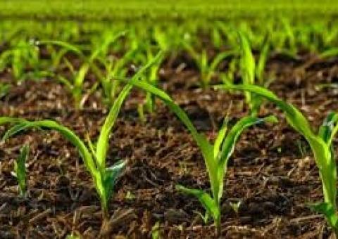دهه طلایی برای صندوق حمایت از توسعه بخش کشاورزی خوزستان
