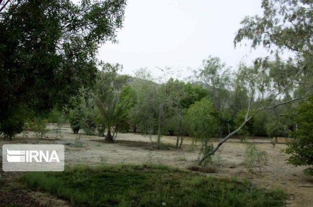 الگوی کشت در باغهای واقع در اراضی شیبدار خوزستان طراحی شد