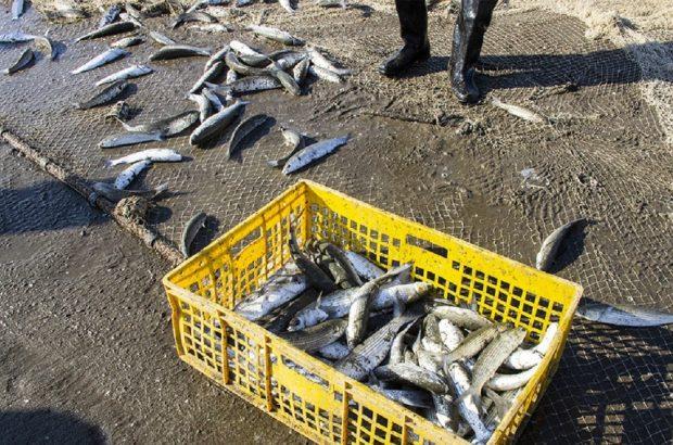 از خرده فروشی تا آبزی پروری/ ماهی گرمابی، مناسب برای رشد چند برابری در خوزستان