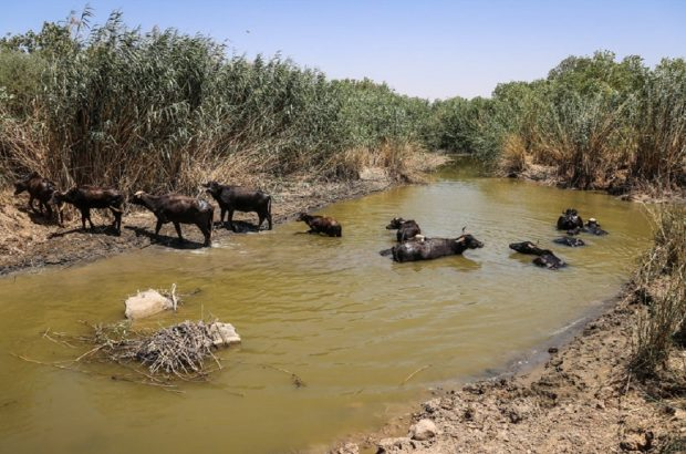 کشاورزی و احشام حاشیه رودخانه کرخه به تدریج تلف میشوند/ مطالبه اصلی ما جبران این عقبماندگیها است