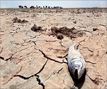 مرگ دلخراش آبزیان در آبهای خوزستان؛ مقصر کیست؟