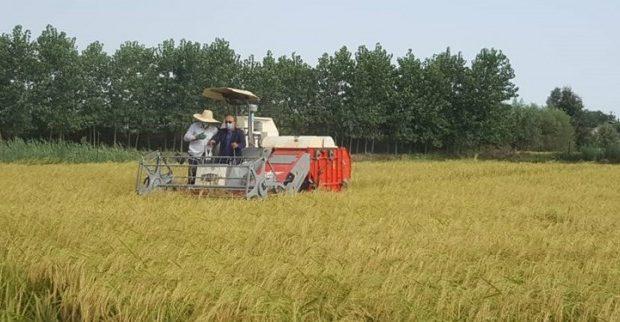 وقتی استاندارخوزستان از کشاورزان بخواهددرمدیریت منابع آبی به میدان بیایند؛کشاورزان ،شلتوک نکارید!